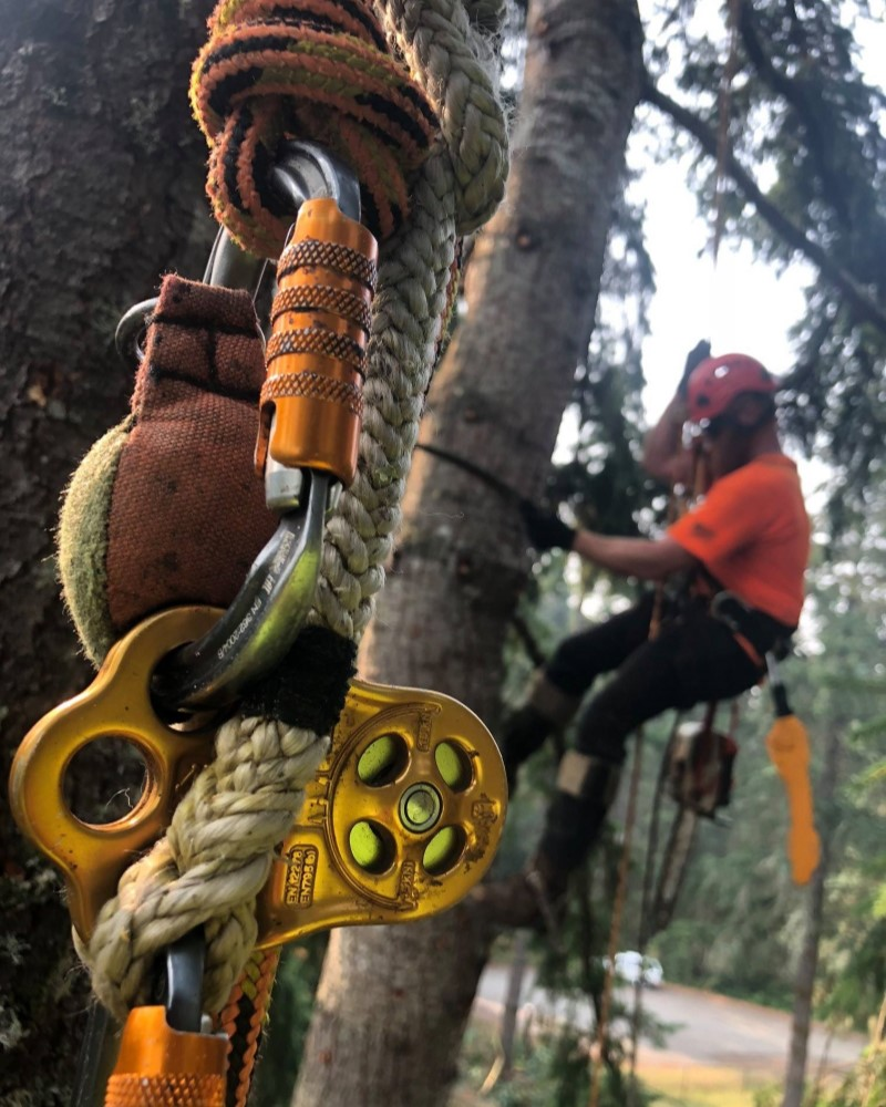 Emergency tree service auckland