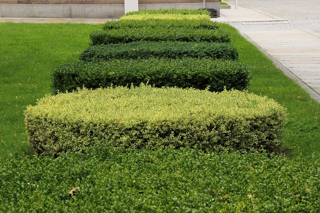 Hedge removal auckland
