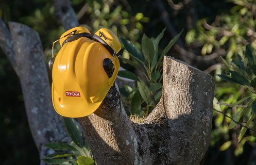 stump removal Auckland